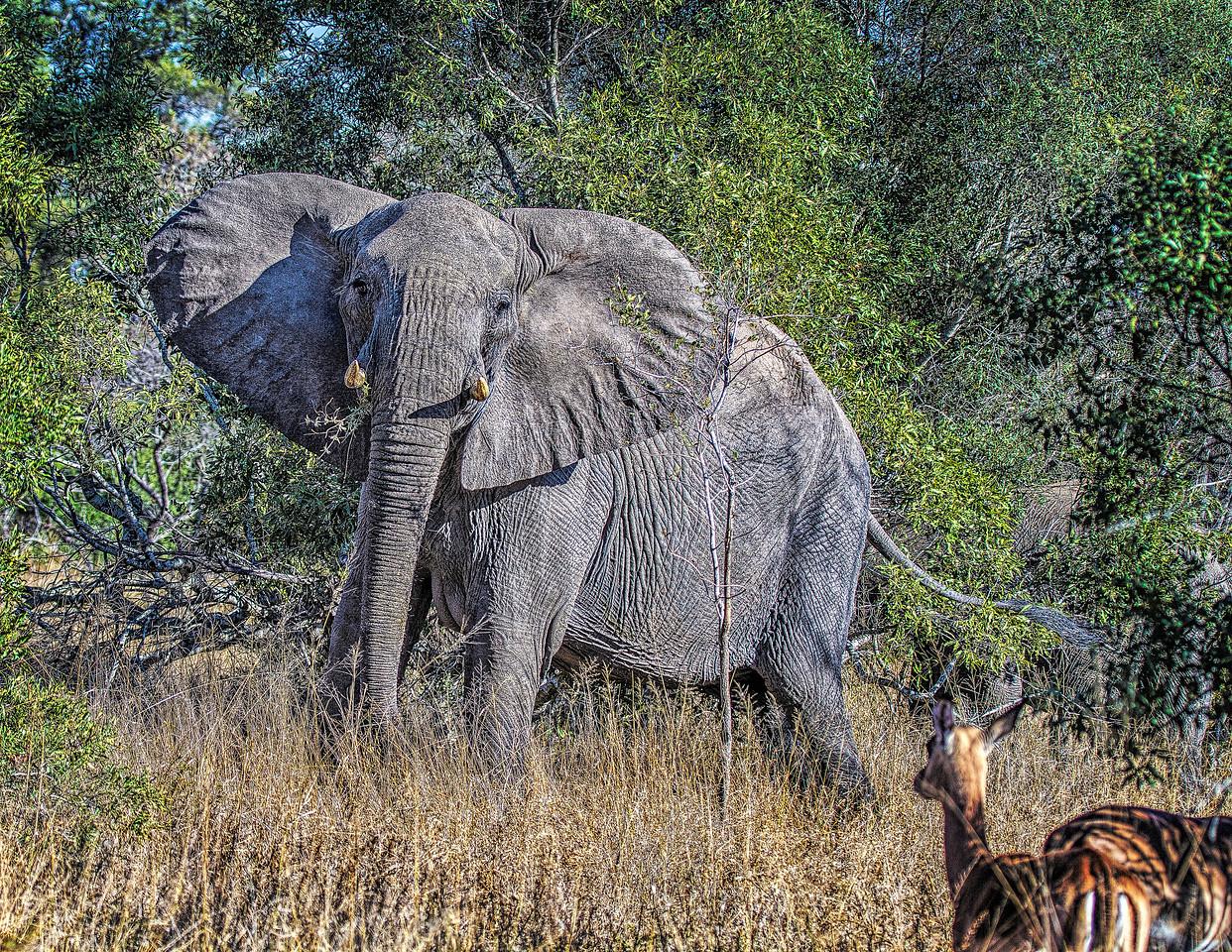 Ngala0714AM-7723 ElephantImpala
