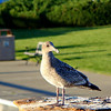 A gull perched on a stump at a pier.