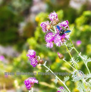 Cool looking Bee