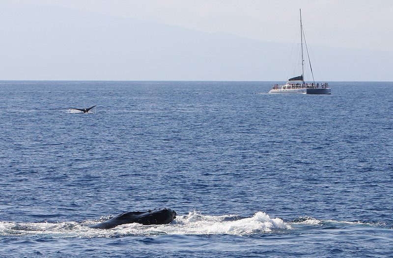 Two members of a widely-disbursed competition pod briefly rest at the surface as the passengers aboard the Ali'i Nui look on.  22 February 2015