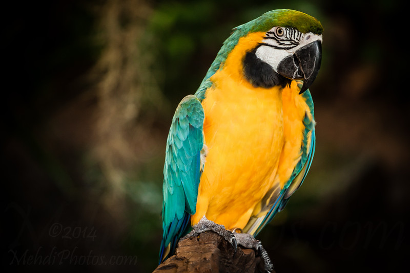 Macaw in Phuket Bird Park