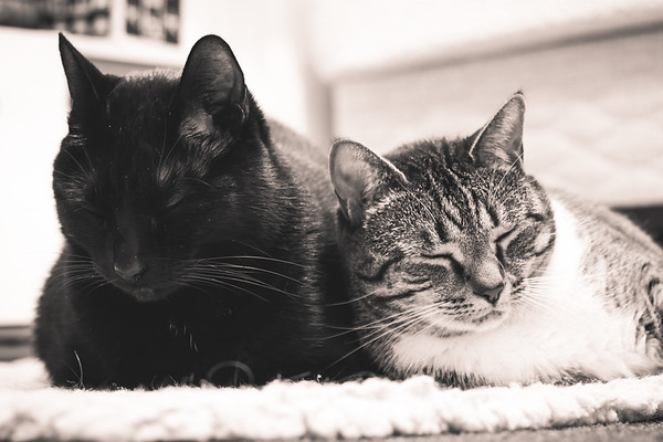 Two Cats Sitting Next To Each Other