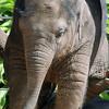 Mali @ Melbourne Zoo.