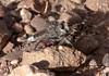 RobberFly Tucson_10-10-25_IMG_2651