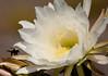 CactusFlwr BotGard_7I2B6787_2011-06-20-10-26-31