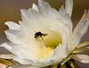 CactusFlwr BotGard_7I2B6795_2011-06-20-10-27-09