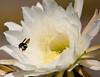 CactusFlwr BotGard_7I2B6786_2011-06-20-10-26-28