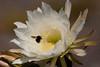 CactusFlwr BotGard_7I2B6790_2011-06-20-10-26-54
