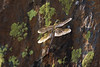 Dragonfly Sequioa_08-09-20_IMG_0253
