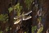 Dragonfly Sequioa_08-09-20_IMG_0256