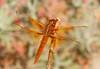 Dragonfly BotGar_7I2B6518_2011-06-03-08-46-49