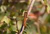 DragonFly BotGard_7I2B6731_2011-06-20-09-32-40