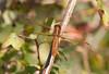 DragonFly BotGard_7I2B6730_2011-06-20-09-32-39