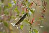 Grasshopper Tucson_10-10-25_IMG_2538