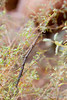 WalkingStick Tucson_10-10-25_IMG_2607