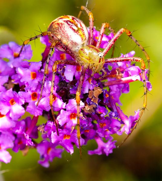 LynxSpider BkYrd_IMG_3823_2011-09-02-17-39-18