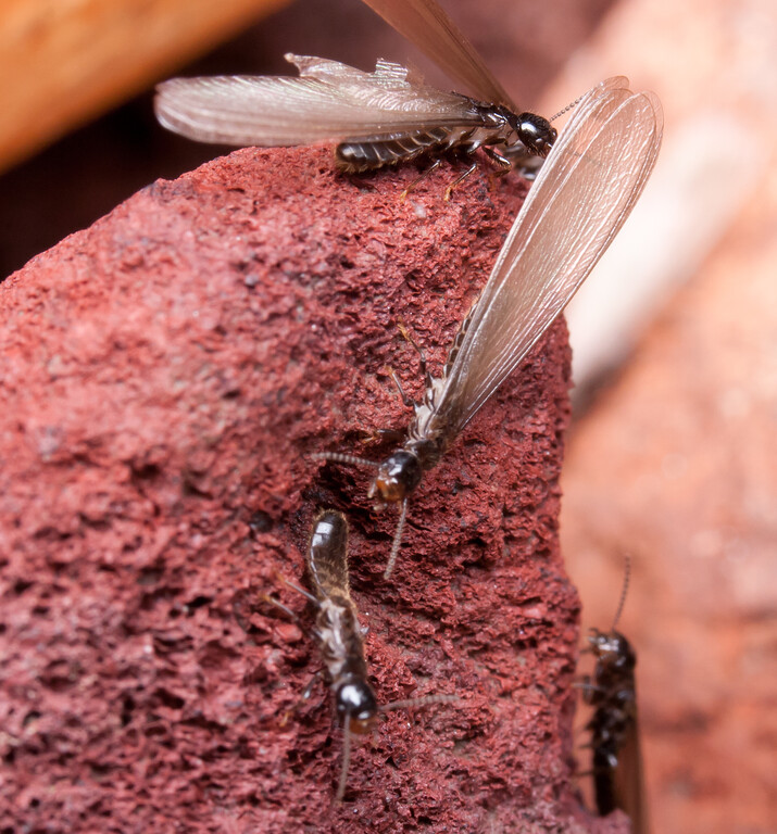 Termites BkYrd_IMG_2929_2010-12-23-12-37-55