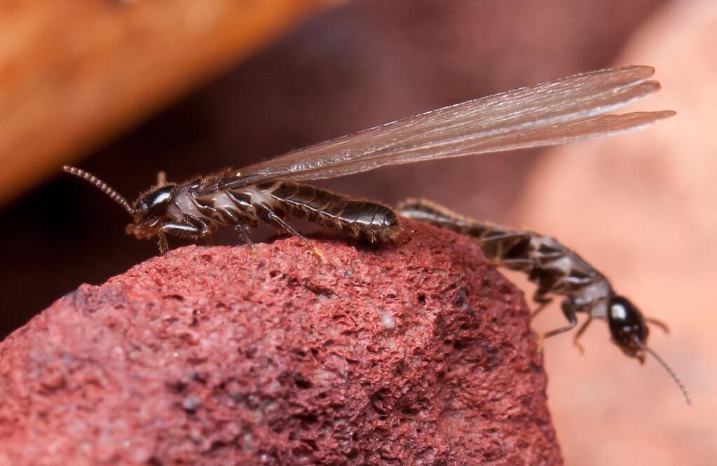 Termites BkYrd_IMG_2928_2010-12-23-12-37-49