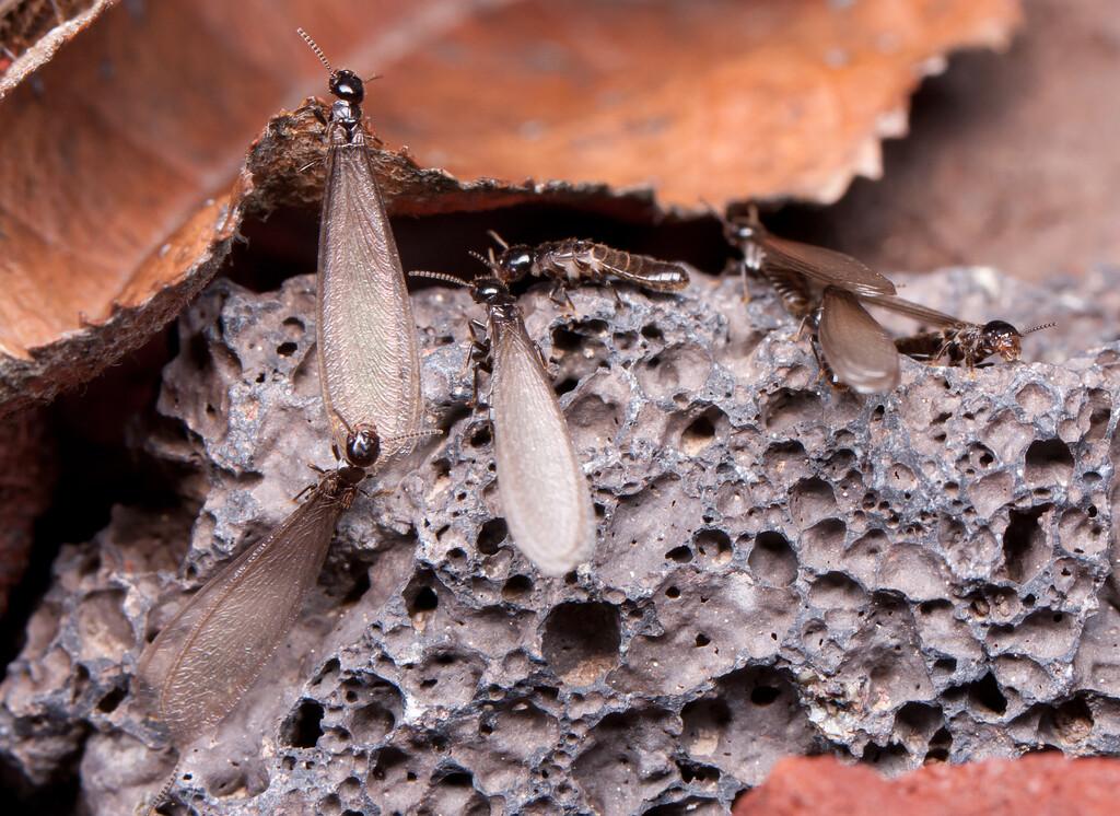 Termites BkYrd_IMG_2933_2010-12-23-12-38-24