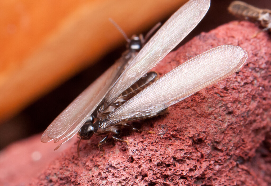 Termites BkYrd_IMG_2930_2010-12-23-12-37-58