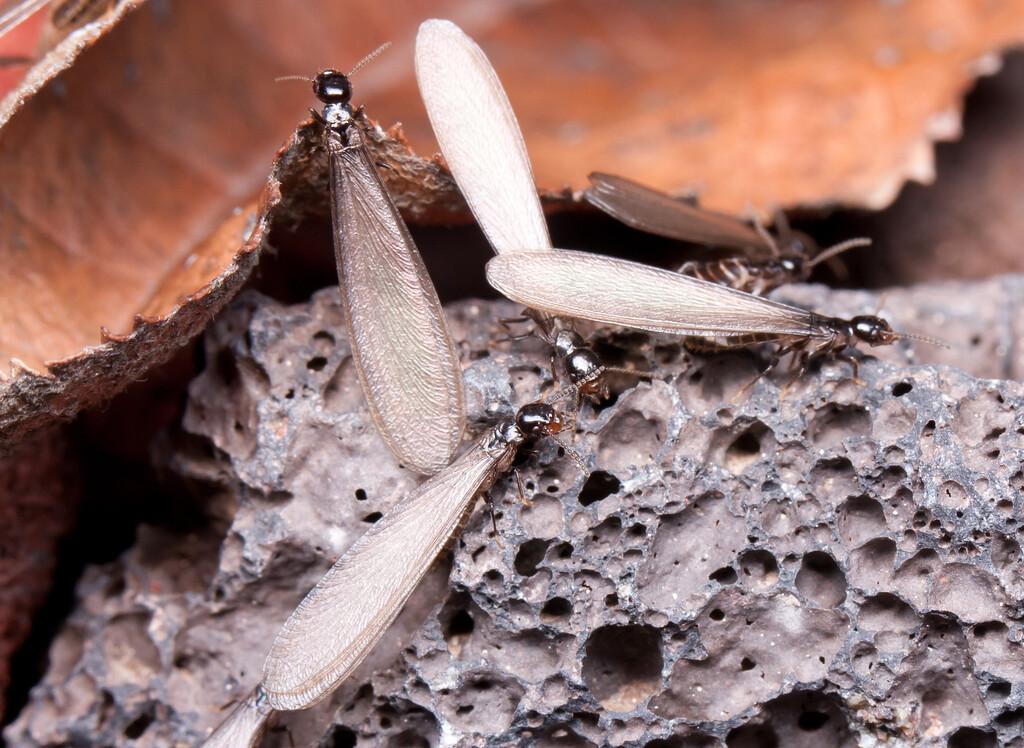 Termites BkYrd_IMG_2932_2010-12-23-12-38-19
