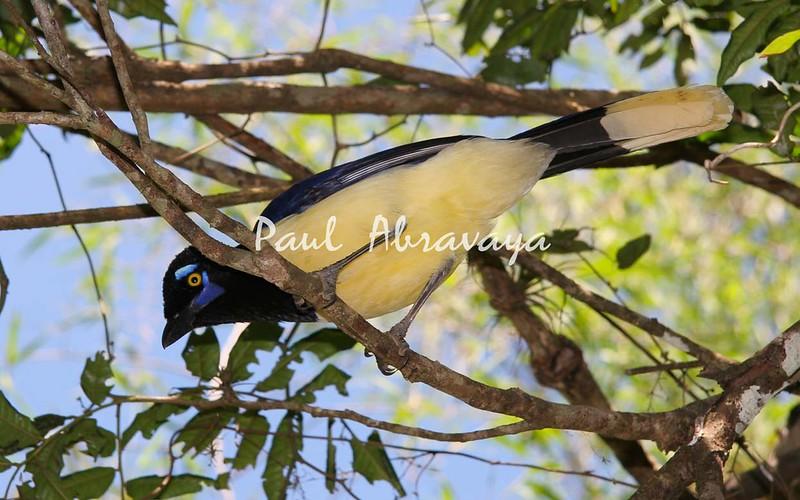 AzureJay Iguassu_4_08-14-05-574569821-O