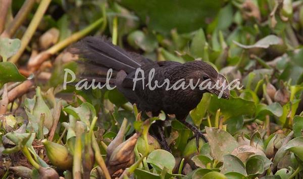 Anni Pantanal_7I2B8299_10-09-2-1085951617-O