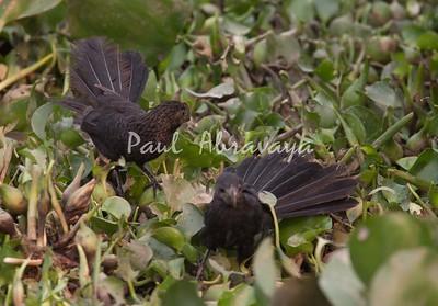 Anni Pantanal_7I2B8301_10-09-2-1085953427-O
