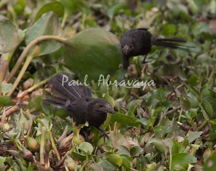 Anni Pantanal_7I2B8300_10-09-2-1085952465-O