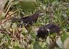 Anni Pantanal_7I2B8302_10-09-2-1085953600-O