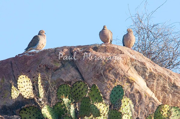 MourningDoves-CLU_07-11-18_000-579329230-O