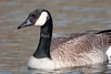 Canadian Goose BolsaChica_07-1-571992903-O