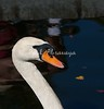 Swan BokTowers FL_IMG_3097_11--1195606300-O