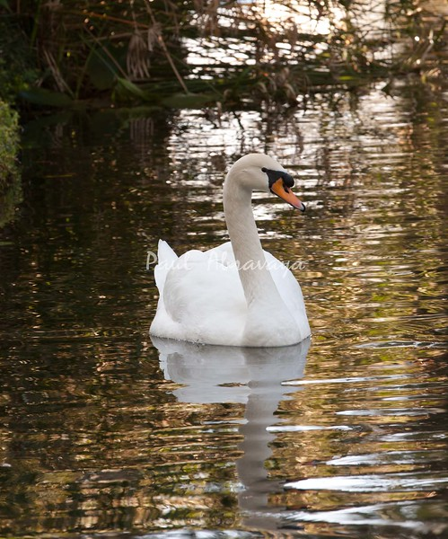 Swan BokTowers FL_IMG_3093_11--1195606065-O
