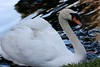 Swan BokTowers FL_IMG_3102_11--1195606836-O