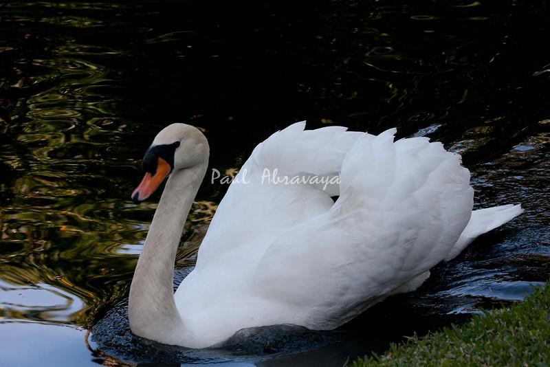 Swan BokTowers FL_IMG_3101_11--1195606637-O