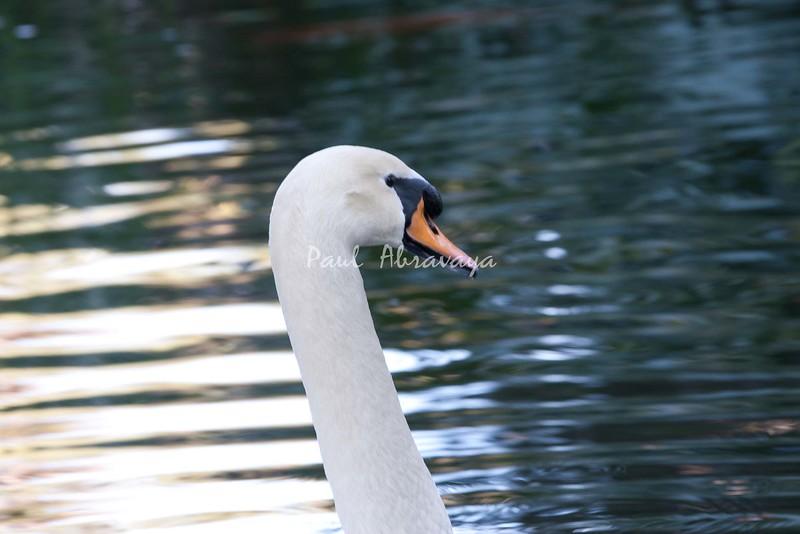 Swan BokTowers FL_IMG_3105_11--1195607063-O