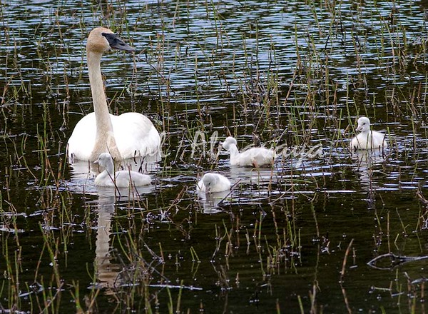 08-06-28_Swans-Haines Hwy_0001-572121991-O