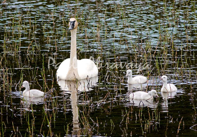 08-06-28_Swans-Haines Hwy_0003-572122024-O