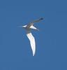 ElegantlTern BolChi_7I2B7276_2011-06-26-16-18-30