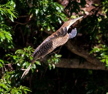 BT Tiger Heron Landing_07-08-18_0001
