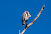 GrtBluHeron BolChica_IMG_3218_2011-02-12-10-23-38
