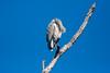 GrtBluHeron BolChica_IMG_3202_2011-02-12-10-16-14