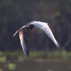 untitled20100928WWhtNeckHeron Pantanal_7I2B0255_10-09-28