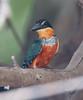 Kingfisher Pantanal_7I2B8756_10-09-24