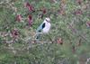 WoodlandKingfisher Kruger_14-03-02__O6B0253