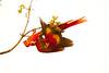 ScarletMacaw Tambor_09-11-06 (339)