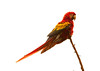 ScarletMacaw Tambor_09-11-06 (268)