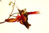ScarletMacaw Tambor_09-11-06 (365)