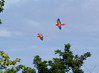 macaws flying (41)_CostaRica-05_07-21-05